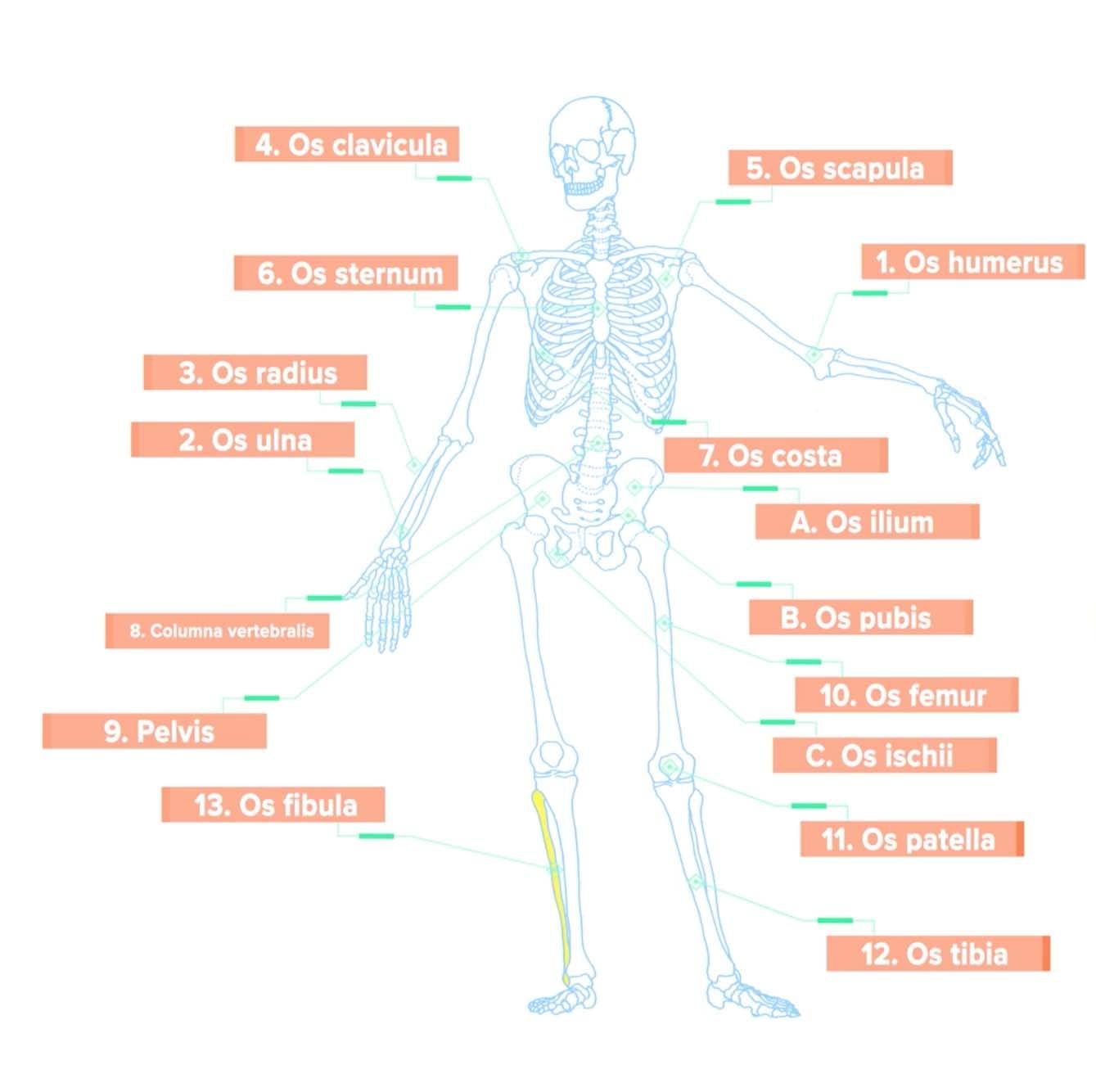 Snoeck Health Academy Fit!vak opleidingen via e-learning, pilates ...